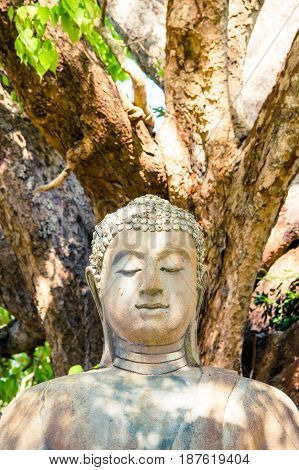 Stone Buddha sculpture meditating with closed eyes outdoors under trees with dappled sunlight over it.
