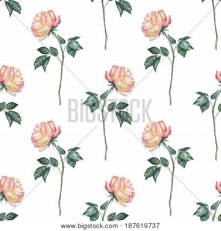Hand drawn watercolor floral seamless pattern. Background with roses 1