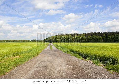 Barley Fields And Farm Track