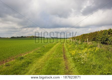 Minster Way And Wheat Field