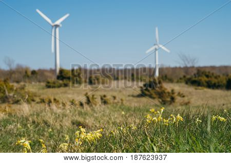 Fresh springtime flowers in front of windmill turbines. Renewable electric energy production concept
