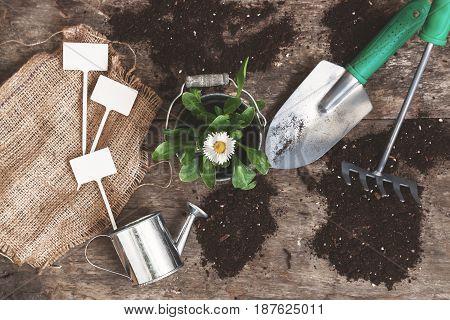 Garden Tool, Shovel, Rake, Watering Can, Bucket, Tablets For Plants, Flower Daisy In A Flowerpot On