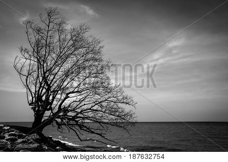 beautiful branches of dead trees on the beach