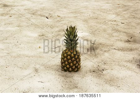 Fruit of pineapple is on dirty spring snow