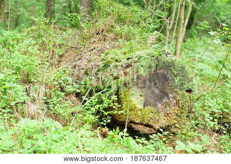 the old mossy log in a dense forest