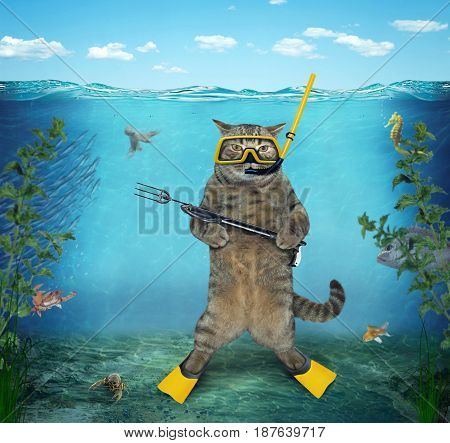 The cat diver with a speargun is under water in the sea.