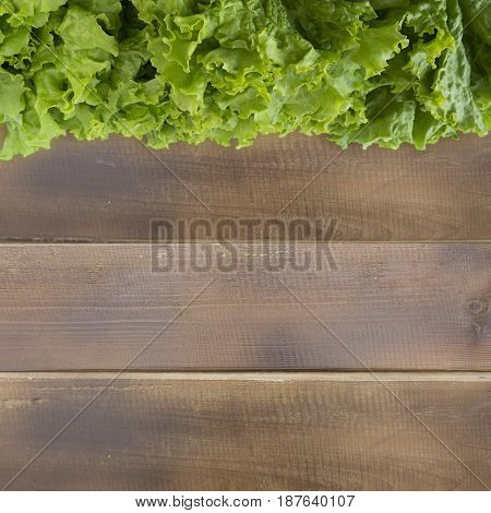 Green lettuce at border of image with copy space for text. Top view. Lettuce on a wooden background.