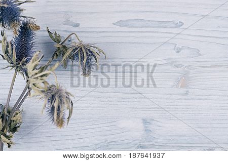 Dry blue flower on light soft blue wooden board. Decorative spring background with copy space top view.