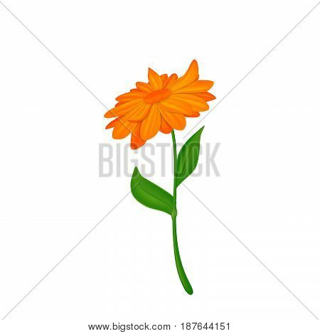 Orange flower, isolated on white background. Vector.