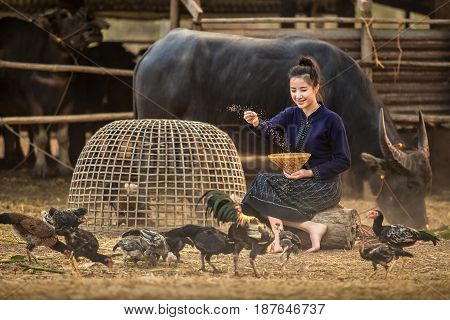 Asian woman who have a rural lifestyle are feeding their chickens happily alone.