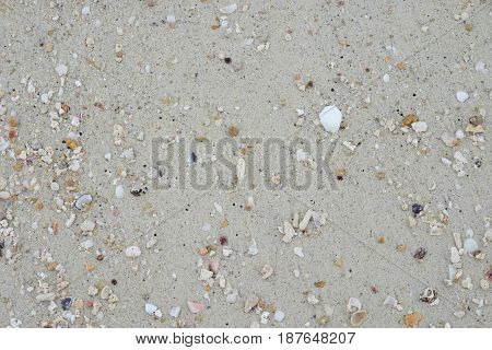 sand beach and have many shellfish carcass. this image for texturebackground and nature concept