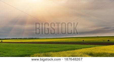 Flowering fields of the rape plant the process of making biofuel