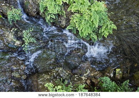 View from above of a small waterfall and tropical ferns with flowing water and moss covered rocks