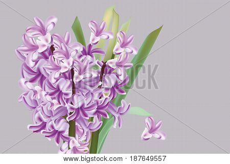 Lily flowers Spring season background Vector illustration