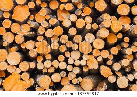 Stacked Timber In A Dutch Forrest