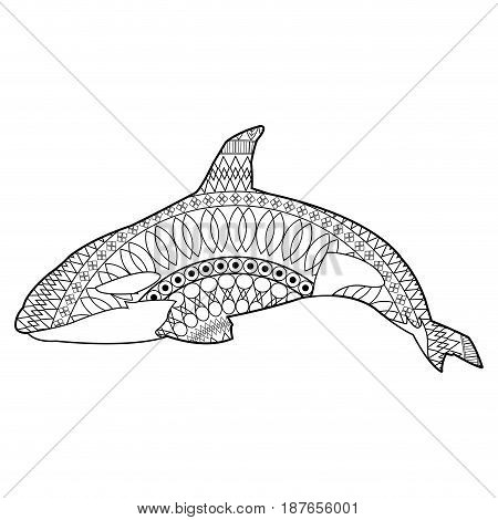 Killer whale illustration, vector, whale, cetacea, animal, aquatic animals, orca poster
