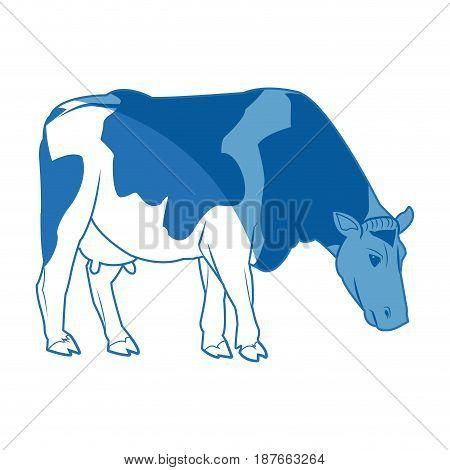 holstein cow standing farm bovine image vector illustration