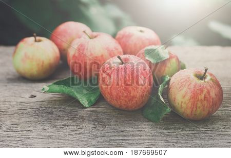 Red and yellow ripe autumn apples scattered on rustic wood background. Seasonal fruit gathering, fall harvest in apple garden, agriculture and farming concept