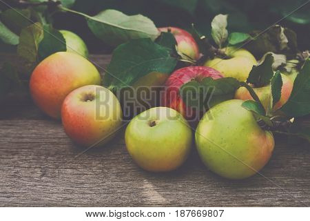 Red and yellow apples on rustic wood background. Flare effect. Seasonal fruit gathering, harvest, agriculture and farming concept