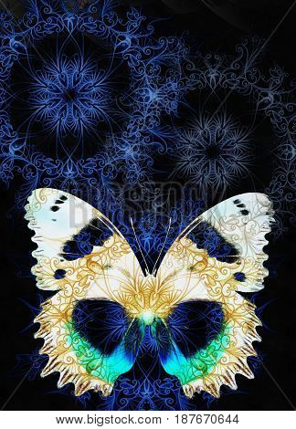 Color Butterfly with ornament and black background
