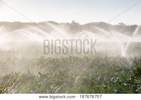 Crop sprayers in action in Mornington Peninsula, Victoria, Australia