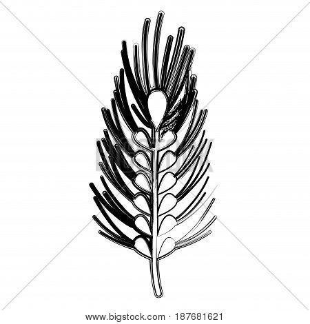 figure healthy wheat organ plant nutricious, vector illustration