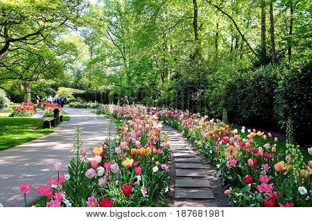 KEUKENHOF HOLLAND - MAY 14 2017: Alley with tulips of different varieties and colorful in the Royal Keukenhof Park
