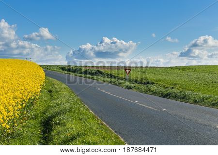 Empty Country Asphalt Road Passing Through Green And Flowering Agricultural Fields. Countryside Land