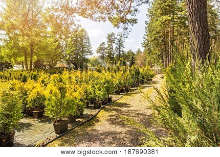 outdoor plant and tree nursery on sunny day