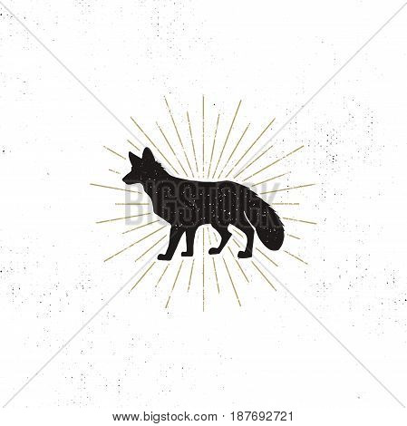 Hand drawn Fox Silhouette illustration. Vintage Black fox with sunbursts isolated on white background. Good for tee shirt, clothing prints, mugs, travel pennant designs. Stock vector on rough.