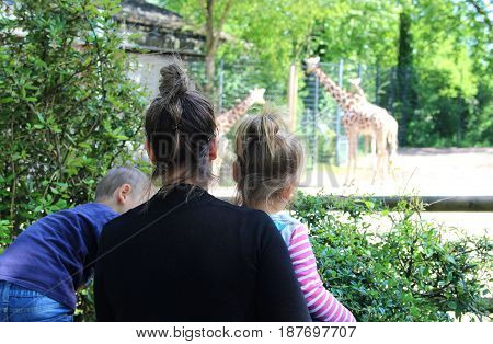 mother and her two little children looking at giraffes at the zoo