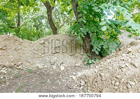 View on piles with ground in deciduous forest park