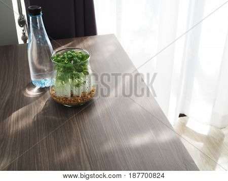 wood office table with garden tree on flowerpot and bottle of water at living room.