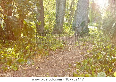 Beautiful wild forest with a pathway in the late afternoon sun with lens flare