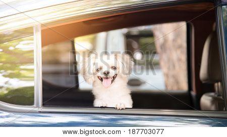 Dog So Cute Sitting Inside A Car Wait For Travel