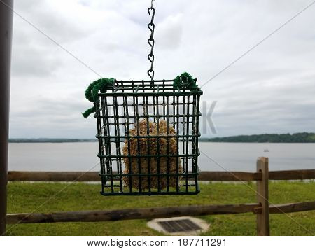 metal suet bird feeder, river, and wood fence