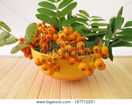 Pome fruits of mountain ash in bowl