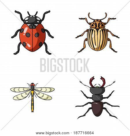 Insect, bug, beetle, paw .Insects set collection icons in cartoon style vector symbol stock illustration .