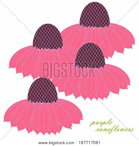 Purple coneflowers for decorated on white stock vector illustration