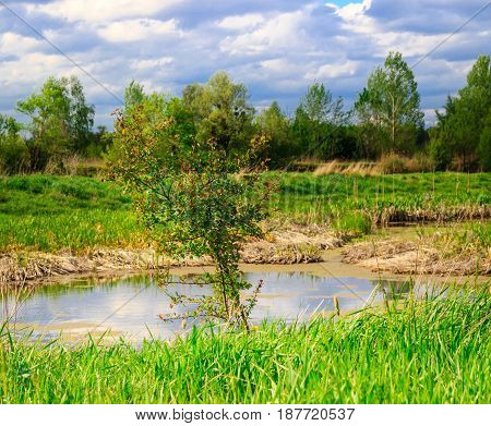 Beautiful young tree against the backdrop of the swamp under the blue sky around the green and beautiful