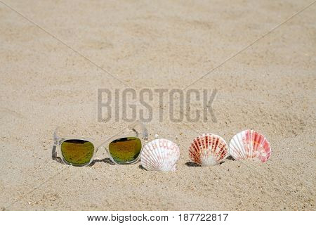 Sunglasses and seashell on beach sand background summer holiday vacation background