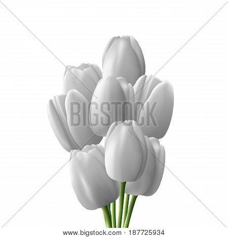 Flower tulip realistic isolated on white background. Bouquet of white tulips.