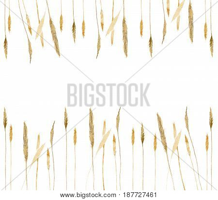 Frame made of hand-drawn wild rye wheat isolated on white background