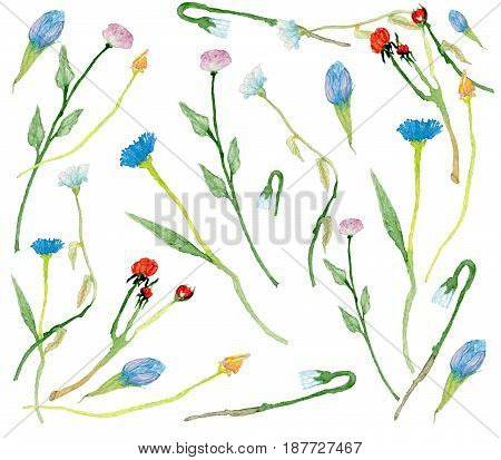 Set of hand-drawn watercolor wild flowers and herbs isolated on white background