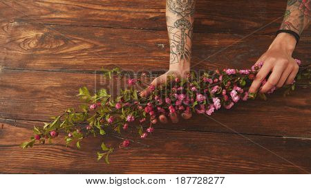 Sakura branches in female hands