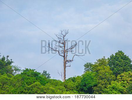 Dead tree branch against blue sky