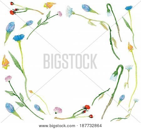 Round frame made of hand-drawn watercolor wild field flowers