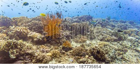 Coral reef and fish in tropical sea or ocean underwater