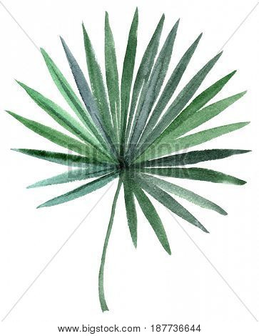 Hand drawn watercolor palm tree leaf isolated on white background