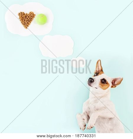 Cute dog. Pet dream about dry food